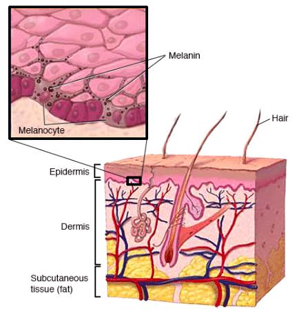vad är hud