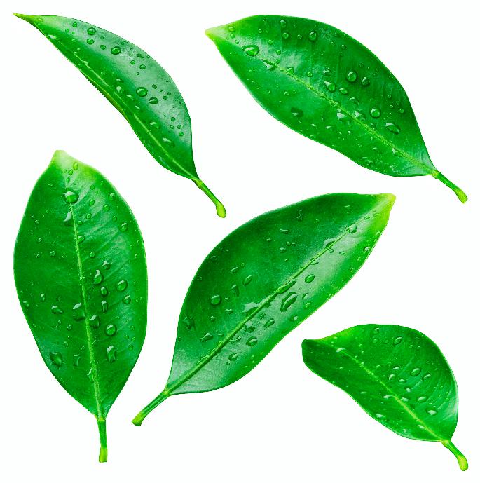 Ekologisk hudvård Del 4: Torr hud