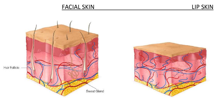 Bild på huden på ansiktet vs läpparna