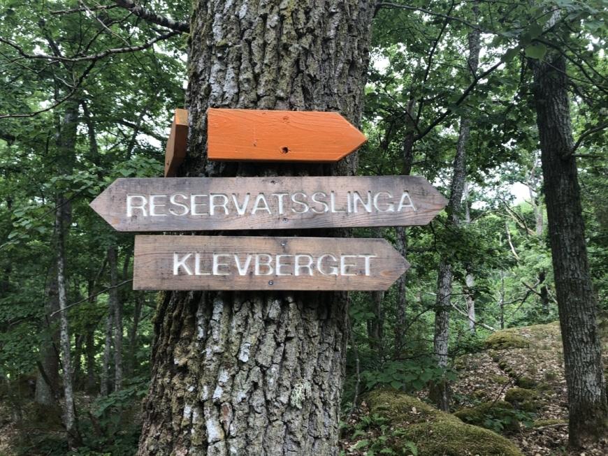 bild på träd vandringsled