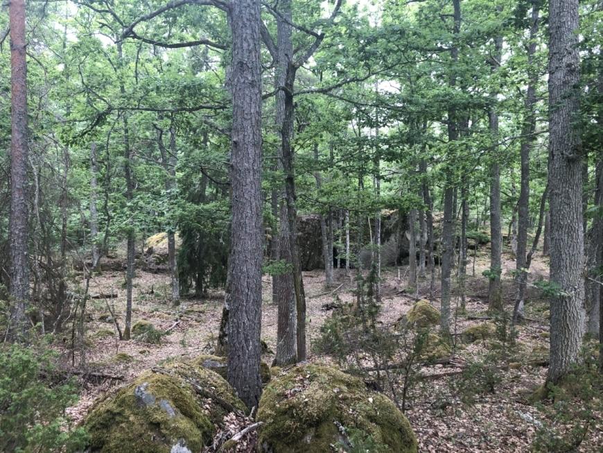 bild skog