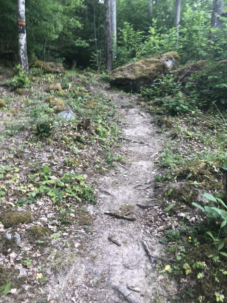 bild på stig